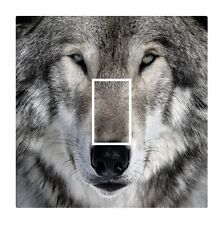 Novelty Cute Wolf Wolves Face Eyes Light Switch Vinyl Sticker Cover Skin Decal