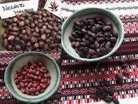 Peanut Sortiment - 3 Varieties - I. - 15+ seeds - DELICIOUS RARITIES!