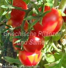 ALASKA Tomate tolerante al frío 10 Semillas Rojo Tamaño Medio tomaten Regalo
