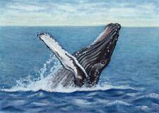 ACEO Whale Humpback ATC Colored Pencil Painting ORIGINAL Art Sherry Goeben