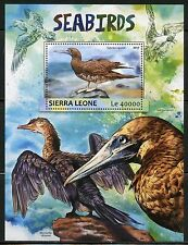 SIERRA LEONE 2017  SEA BIRDS   SOUVENIR SHEET MINT NH