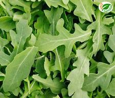 Rucula ( Eruca sativa ) 2.000 semillas seeds * Rúcula * Rucola