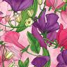 MODA Fabric ~ SWEET PEA & LILY ~ Robin Pickens (48640 18) Primrose by 1/2 yard
