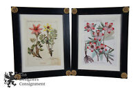 2 Antique Scientific Illustration Botanical Floral Prints Hellebore Flower Frame
