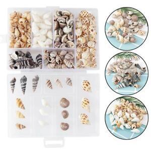 100g Small Mini Conch Shells Bulk Natural Beach Sea DIY Findings Craft Hot!!!