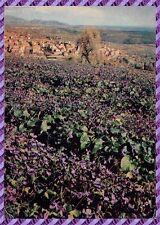 TOURETTES-SUR-LOUP la flowering of purple around of / the village