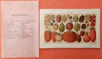 Beerenobst Beeren Obst Erdbeere Johannisbeere Farbtafel Lithographie um 1900