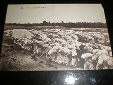 Old postcard North Africa muslims at prayer c1900s
