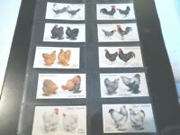 1931 POULTRY chicken hen rooster Complete Player Tobacco Card Set 50 cards lot