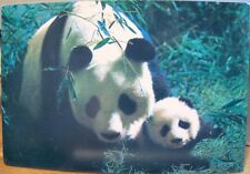 Vintage Chinese Hong Kong Postcard PANDA Bear Mother and CUB Bamboo CHINA 4x6