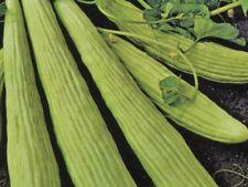 Armenian Cucumber  20 seeds,
