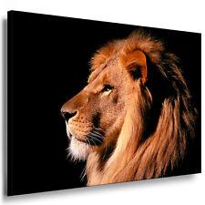 Bild Leinwand Bilder mit Keilrahmen Löwe N1635 Wanbild Kunstdruck kein Poster