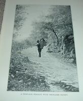 1903 Antique Print  TYROLESE PEASANT WITH SHOULDER BASKET South Tyrol Italy