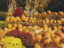 """*Postcard-Halloween-""""Display of Pumpkins""""...w/Hay & Flowers-   (V-23)"""