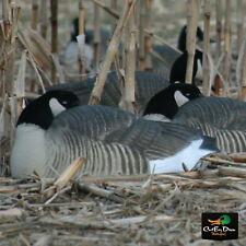 Avery Greenhead Gear Ghg Pro Grade Honker Canada Goose Sleeper Shell Decoys 12
