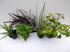 Pflanzenset für Paludarien und Terrarium oder Vivarien 2,42€/Stck
