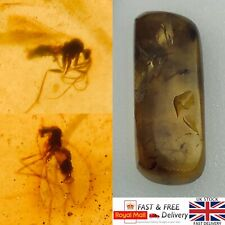 More details for x2 mosquitoes in dinosaur age burmese amber fossil burmite myanmar 1.44g *516