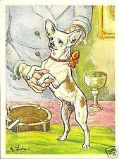 Rare 1952 Dog Art Print Austria Tobacco Bildwerk Card SMOOTH COATED CHIHUAHUA