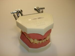Natural Nissin Dental Übungsmodelle Dental Study Model Funktionsmodell
