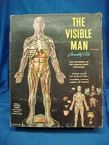 1959 THE VISIBLE MAN Unbuilt HUMAN Anatomy MODEL by RENWAL
