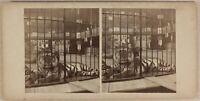 Cirque Circo Fleas Tigre USA UK c1890 Foto Stereo Vintage Albumina n2