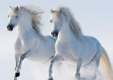 white horse's Photo Poster Print ONLY Wall Art A4