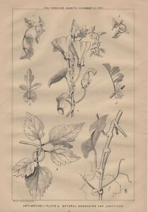 1876 Print 'ART-BOTANY. -PLATE 3. BUDS & BUDDING FORM' Litho by Wyman & Sons.