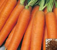 Carrot Seeds COMBO Nebula Atomic Red Cored Chantentay White Solar Yellow Nantes