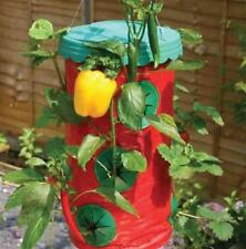 Hanging Chilli Strawberry Grower Planter Hydrophonic Pest Free Let's Grow