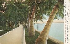 WEST PALM BEACH FL – Along the Lake Path – udb – 1907