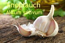 ***Knoblauchöl, ätherisches Öl (Allium sativum) 20ml (China) Topp!!