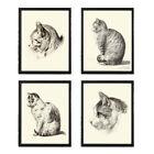 Unframed Cat Cats Animal Prints Set of 4 Antique Cute Kitten Home Decor Wall Art