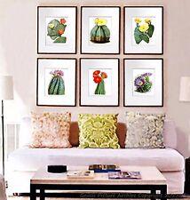 Vintage Botanical Art set of 6 prints Flowering Cactus Southwestern wall Decor