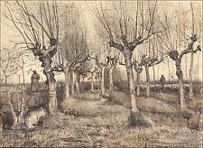Van Gogh Drawings: Pollard Birches - Fine Art Print