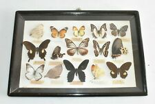 Schmetterlinge Schaukasten Exotisch 15 Schmetterlinge 47 cm Fach D1