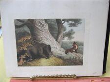 Vintage Print,FOX+WILD BEAR,Work of Animals,Aesop,Gay,Phaedrus,Howitt,1811