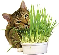 Mille graines - HERBE A CHAT - Facilite son transit !!!