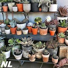 100Pcs Aloe Vera Seeds 7 Species Succulent Herbal Medicinal Bonsai Natural Plant