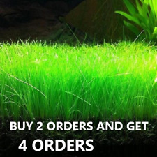 Dwarf Hairgrass Eleocharis Parvula Live Aquarium Plants Buy 2 Get 2 Free