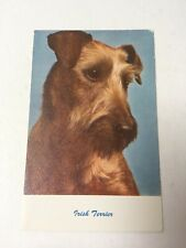 Vintage Postcard, Irish Terrier, Dog, Standard Arts