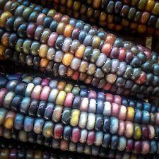 Certified Organic Bulk Glass Gem Corn Seeds (~350): Non-GMO Heirloom Seed Packet