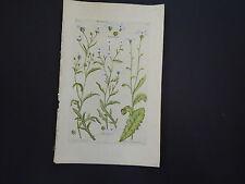 Sir John Hill, Botanical, The Vegetable System 1761-1775 Wayweed #24