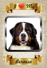 "Bernese Mountain Dog Flexible Magnet I Love My 2.75"" x 4"" See Video"