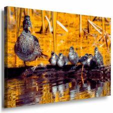 Enten Familie See Wald Leinwandbild AK Art Bilder Mehrfarbig Kunstdruck Wandbild