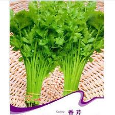 FD1343 Celery Seed Vegetable Seed Apium Graveolens Garden Seed ~1 Pack 60 Seed✿