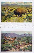 Plant & Animal Communities of the World - Bison/Buffalo & Fox/Deer -1950s Prints