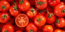 TOMATO ACE 55 VF HUGE CROPS OF TASTY MEDIUM SIZED BEEFSTEAK FRUIT 20 FRESH SEEDS