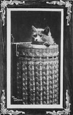 C-1910 Cat on the Lookout Interior Fancy border Rppc real photo postcard 10559