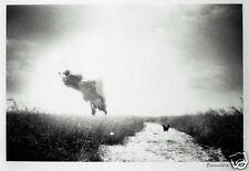 Fine Art Photography -S/N Silver Gelatin Print - Canada Geese