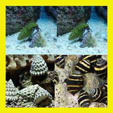 Marine Cleaner Pack Standard (Saltwater Fish) Snails and Crabs